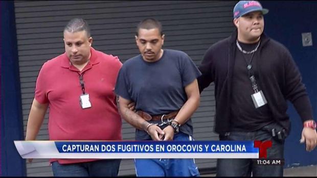 Capturan fugitivos en Carolina y Orocovis