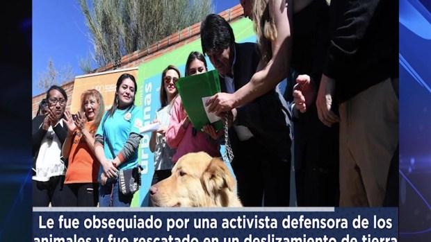 [TLMD - NATL] El perro rescatado que le regalaron a Evo Morales