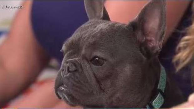 [TLMD - National] El entrenamiento que puede salvarle la vida a tu mascota o ahorrarte disgustos