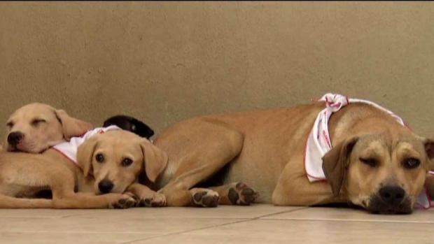 [TLMD - PR] Mascotas consiguen nuevo hogar y familia