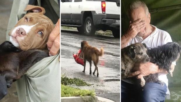 Otras víctimas de Harvey: sobrevivientes peludos