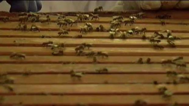[TLMD - PR] Vitales las abejas para la siembra y cosecha