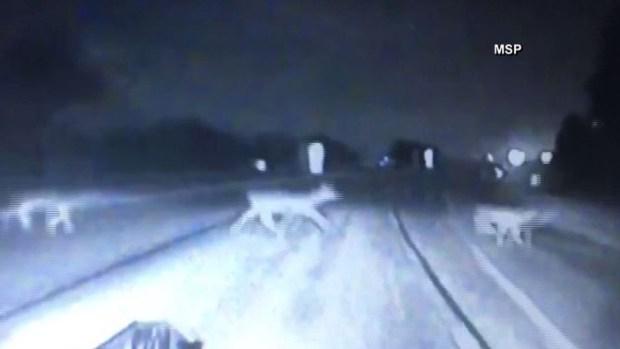 Ciervos cruzan carretera y se salvan de milagro