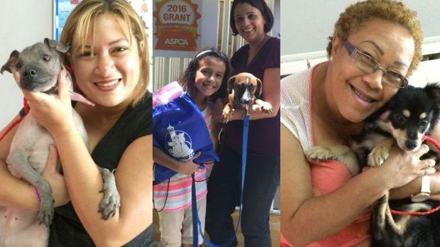 ¡Anímate y adopta! Mascotas que han encontrado un hogar