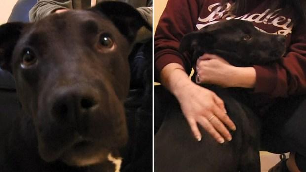 """[TLMD - LV] """"Milagro"""", perrito vuelve a la vida tras inyección letal"""