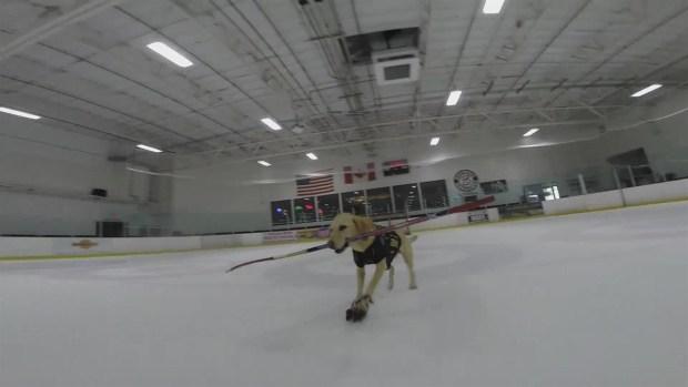 [TLMD - LV] Mascota aprende a patinar sobre hielo