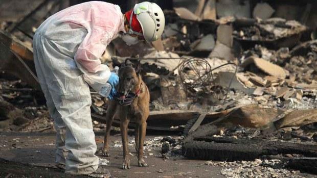 Una semana de incendios: mil desaparecidos y 74 muertos en California
