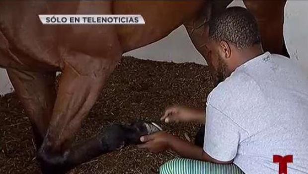 Denuncia: sacrifican caballos del Hipódromo