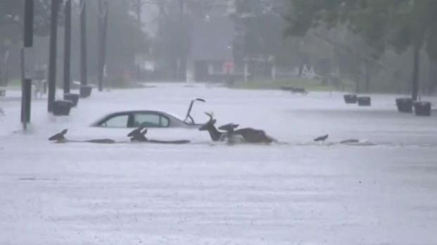 Florence causa devastadoras inundaciones