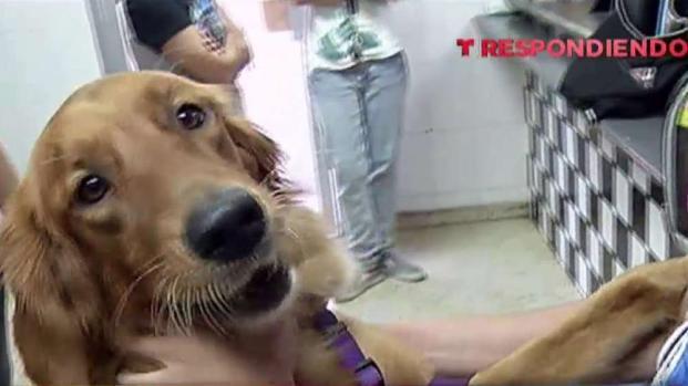 [TLMD - PR] Llega la luz a albergue de animales en Guaynabo