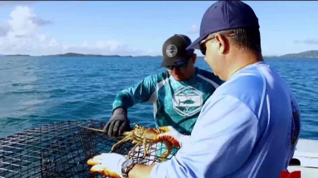 [TLMD - PR] Obreros del Mar: Pescador narra los retos que enfrentan al zarpar