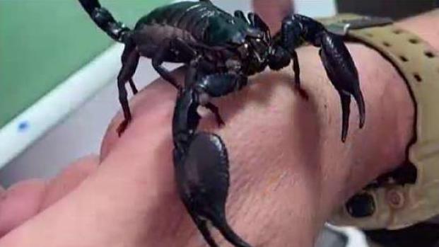 [TLMD - PR] Ocupan animales exóticos en Hatillo