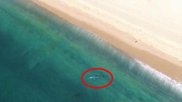 Cuadrilla intenta liberar a ballena atrapada en playa
