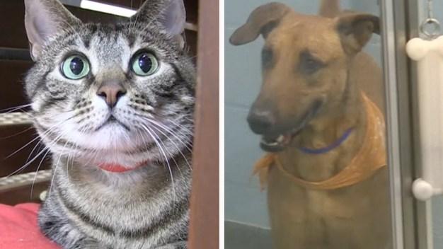 Albergue busca ayudar a dueños de mascotas