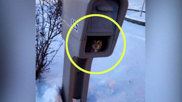 Descubren pequeña criatura viviendo en buzón del correo