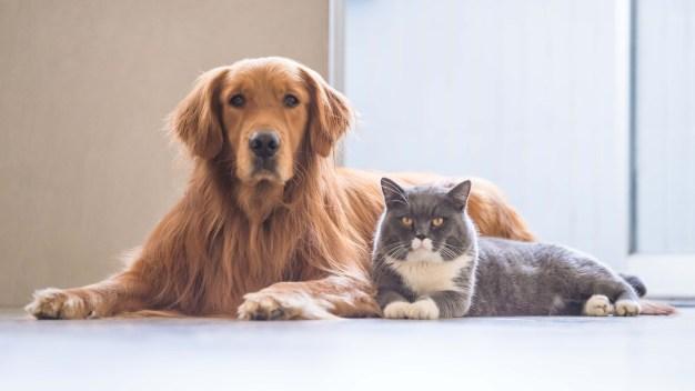 Lanzan competencia para apoyar adopciones de animales}