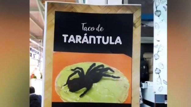 Sirven tacos de tarántula y cucarachas gigantes