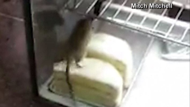 Reabre panadería luego que rata quedó captada en video
