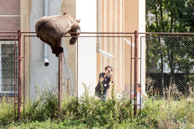 Espectacular huida de un oso tras matar a una cabra en una casa