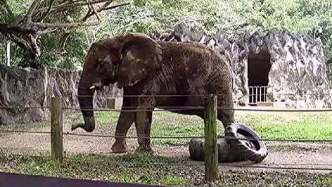 Radican resolución exigiendo apertura Zoológico Mayagüez