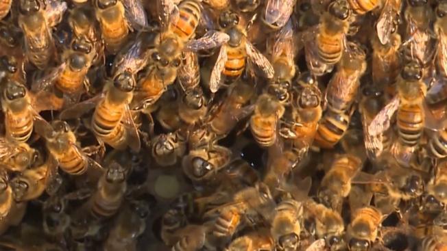 Anciano muere tras ser atacado por abejas en su casa