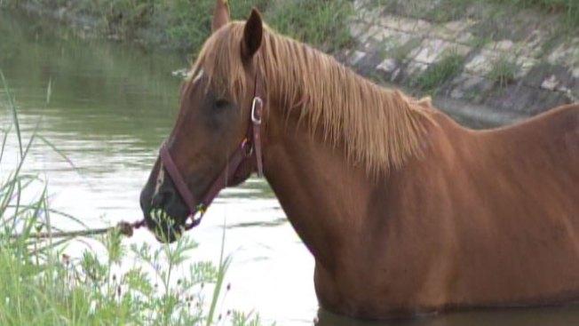 Mujer impacta a caballo en Utuado