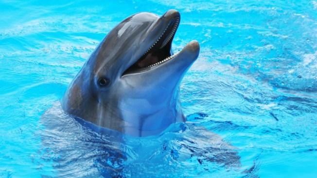 Turistas dejan morir delfín por un ''selfie''
