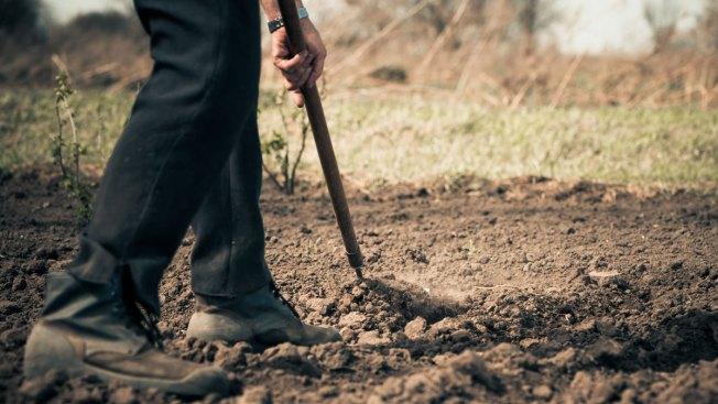 Agricultores podrán solicitar asistencia tras el azote de María