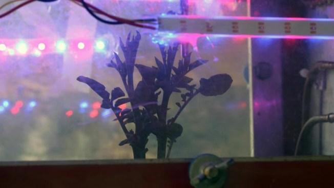 Descubren alimento que podría cultivarse en Marte