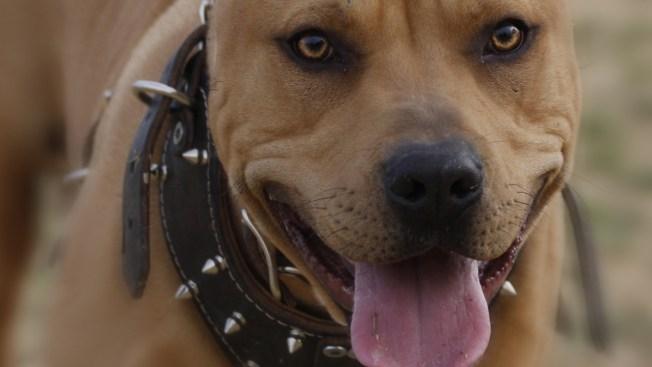 Procesan primer caso en la isla por videos de peleas de perros
