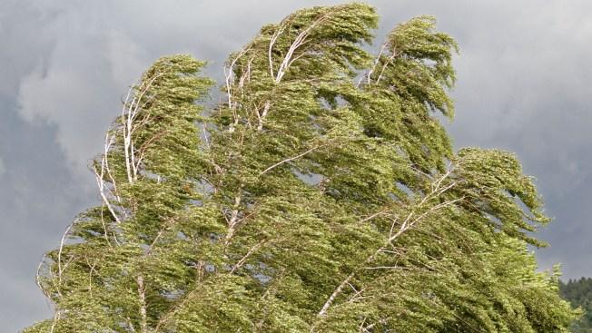 Hombre pierde la vida al caerle árbol encima en Ciales