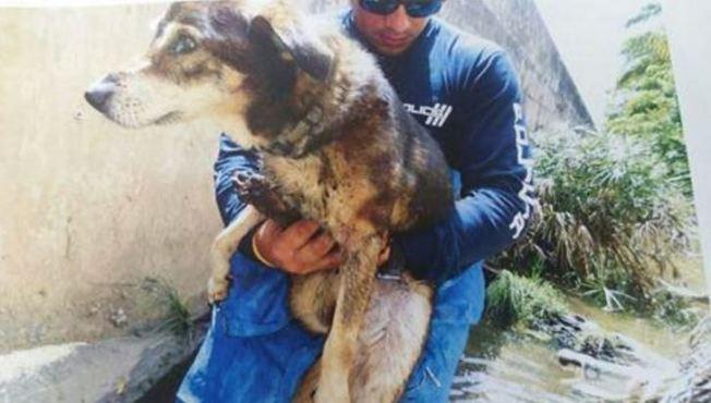 Rescatan perro que cayó en alcantarilla