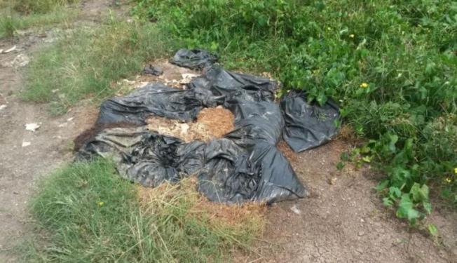 Policía investiga otro hallazgo de perros muertos