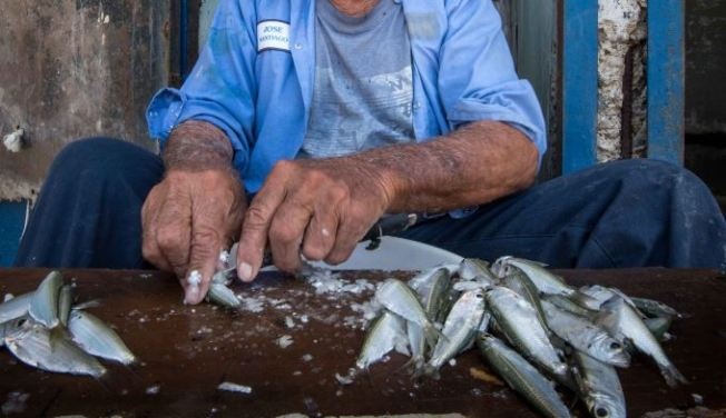 Exhortan a consumir pescado local en Semana Santa