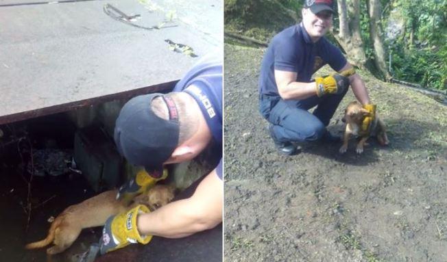 Viral: Bombero rescata perrita atrapada en alcantarilla