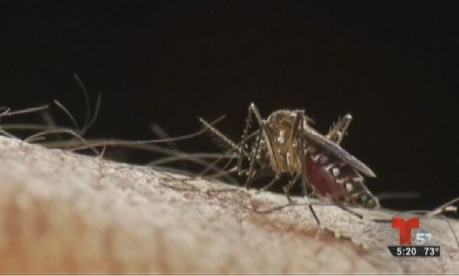 Muere otra persona por Zika en la Isla