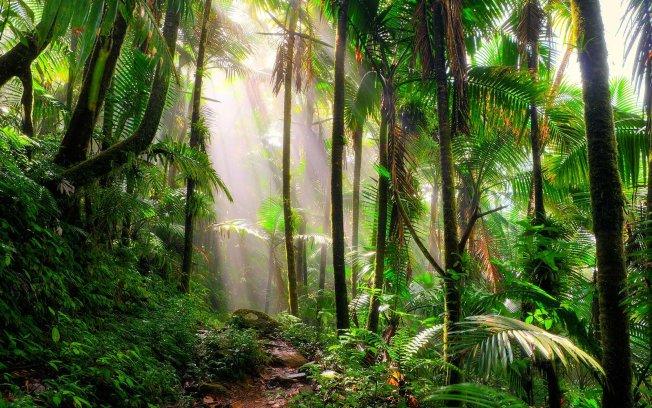 El Yunque se lleva el primer lugar en competencia turística