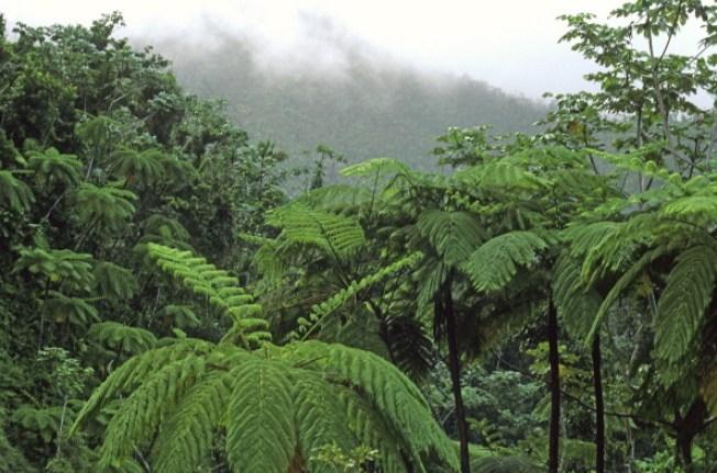 Reabren carretera en dirección a El Yunque