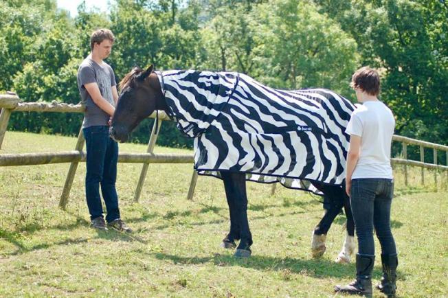 """Por qué los caballos """"envidian"""" las rayas de las cebras"""