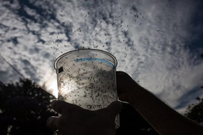 Confirman 249 casos de Zika en la Isla