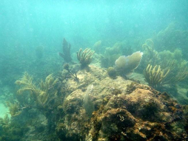 Aprueban medida para proteger los arrecifes de coral