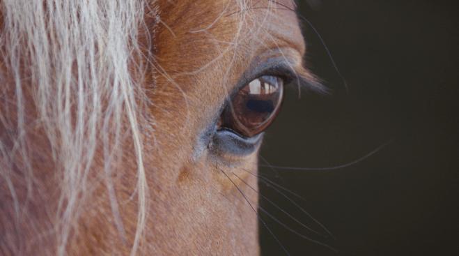 Policía dona caballos para tratar a personas con autismo