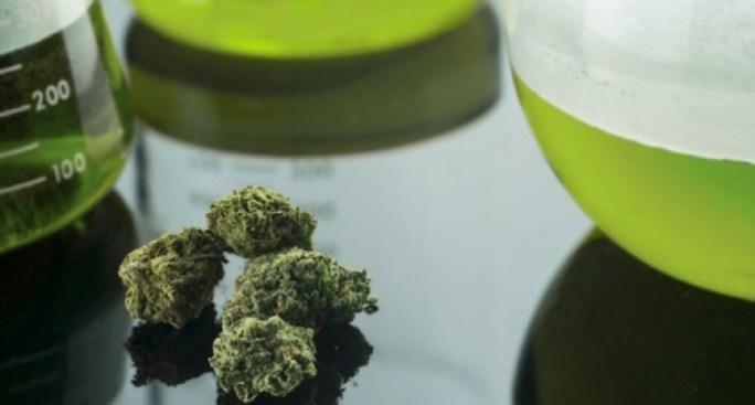 Establecerán 250 establecimientos de Cannabis Medicinal