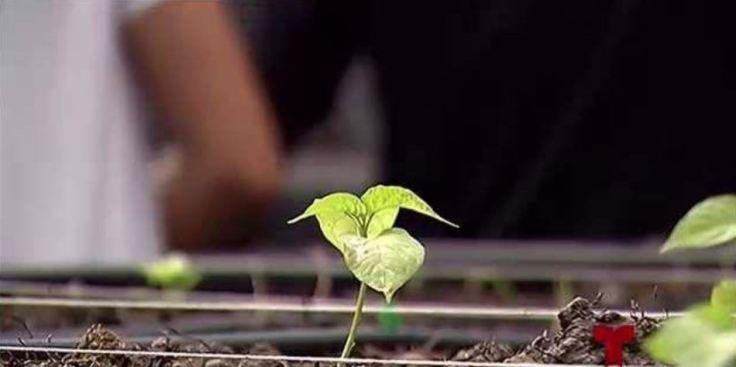 Desembolso millonario para la industria agrícola